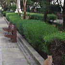 Maltese Cat by seymourpics