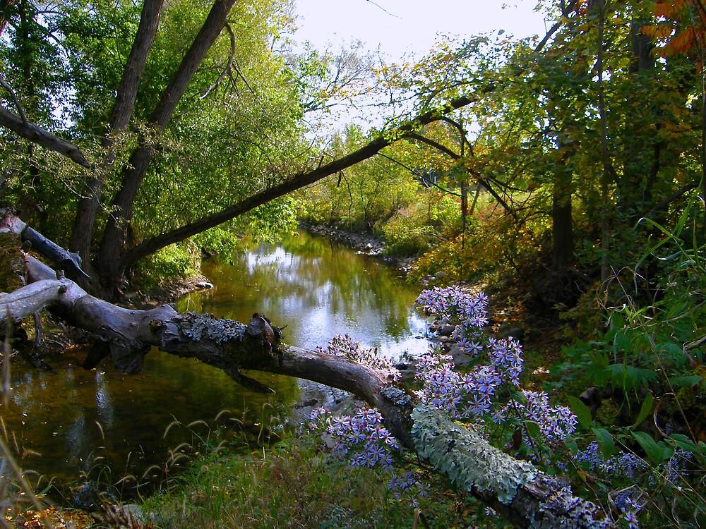 A River View by marchello
