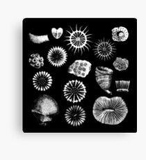Fossil Corals Canvas Print