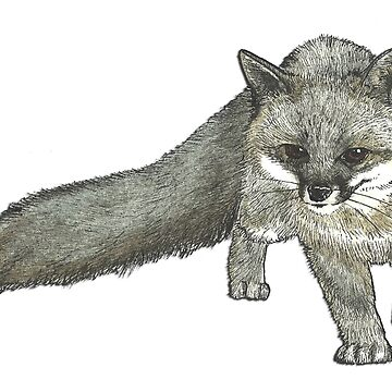 Silver Tail Fox by felissimha