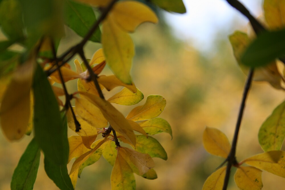 Fall is Coming by Rebecca Leonard