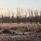 Wakarusa Wetlands in Winter by LChrisTaylor