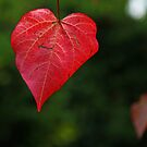 Red Leaf by John Dalkin