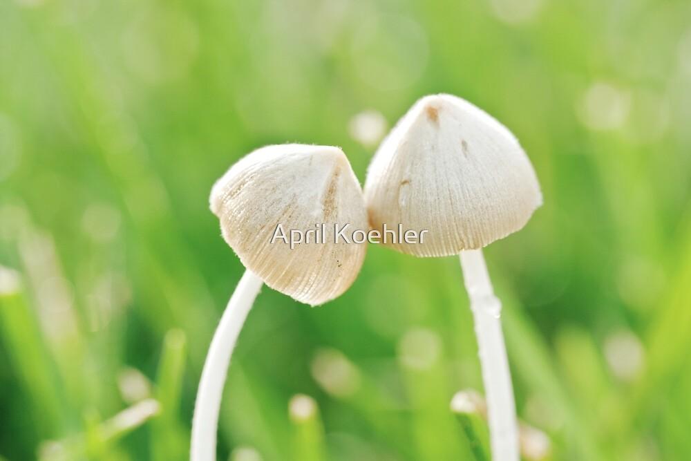 Fungi Romance by April Koehler