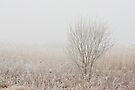 Alone In The Fog by April Koehler