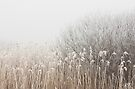 Grass and Branches by April Koehler