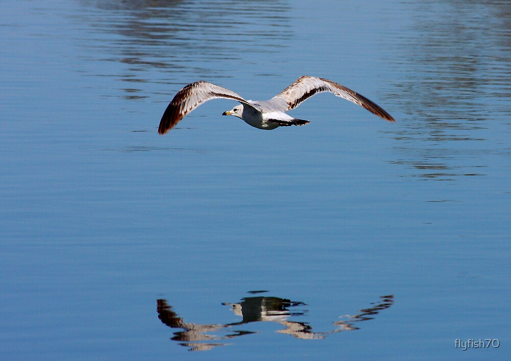 Low fly by by flyfish70
