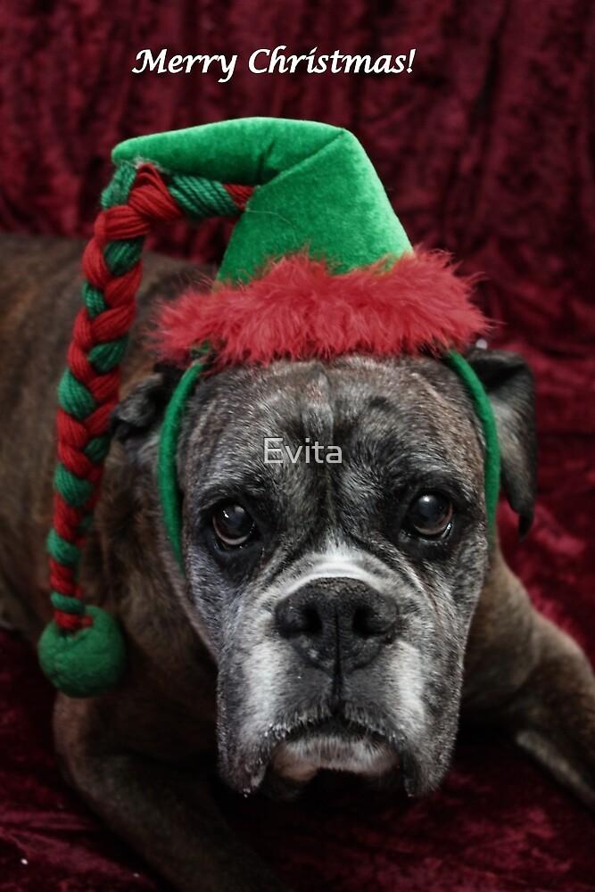 Frohe Weihnachten ~ Boxer Dog Series von Evita