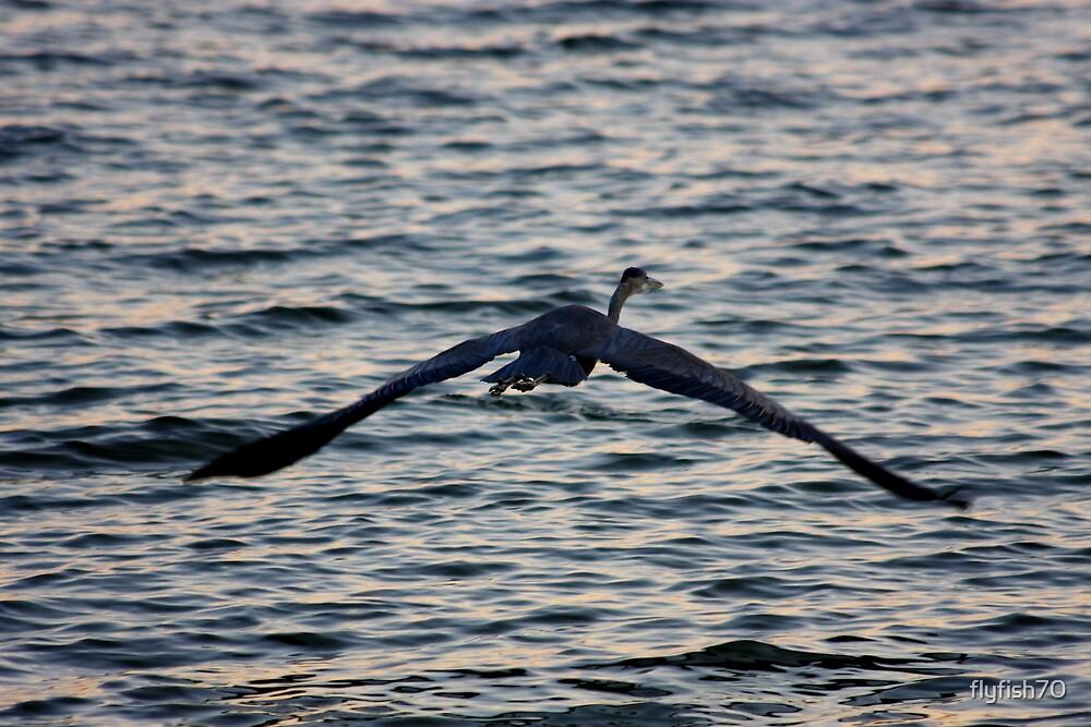 Glide Escape by flyfish70