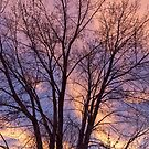 Tree Colors Of The Night by Bo Insogna