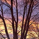 Colorful Tree Branches Night by Bo Insogna