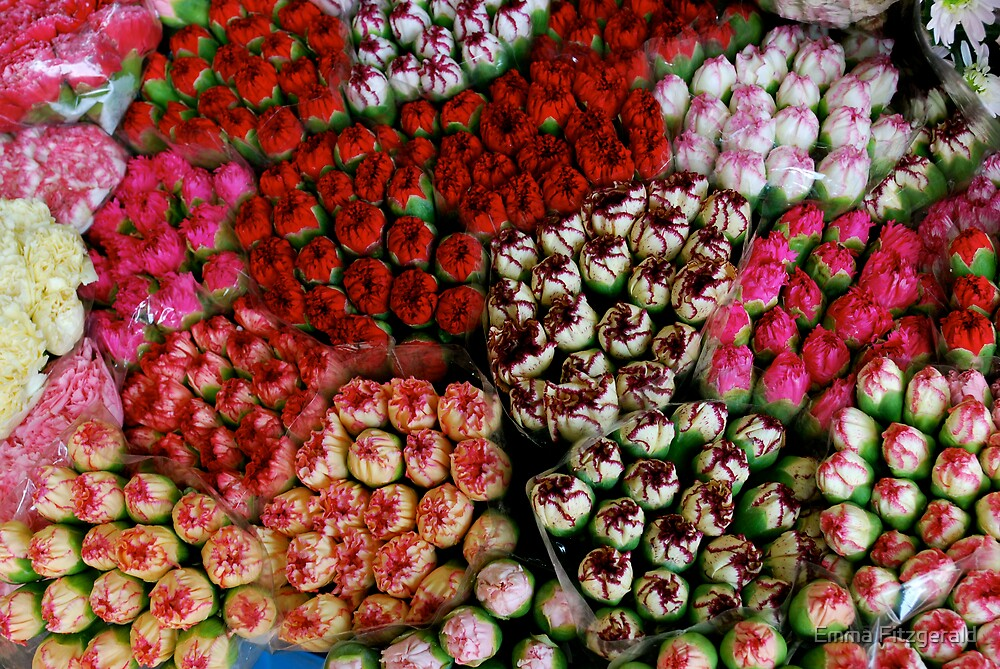 Carnations Anyone? by Emma Fitzgerald