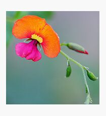 Orange and Pink Photographic Print