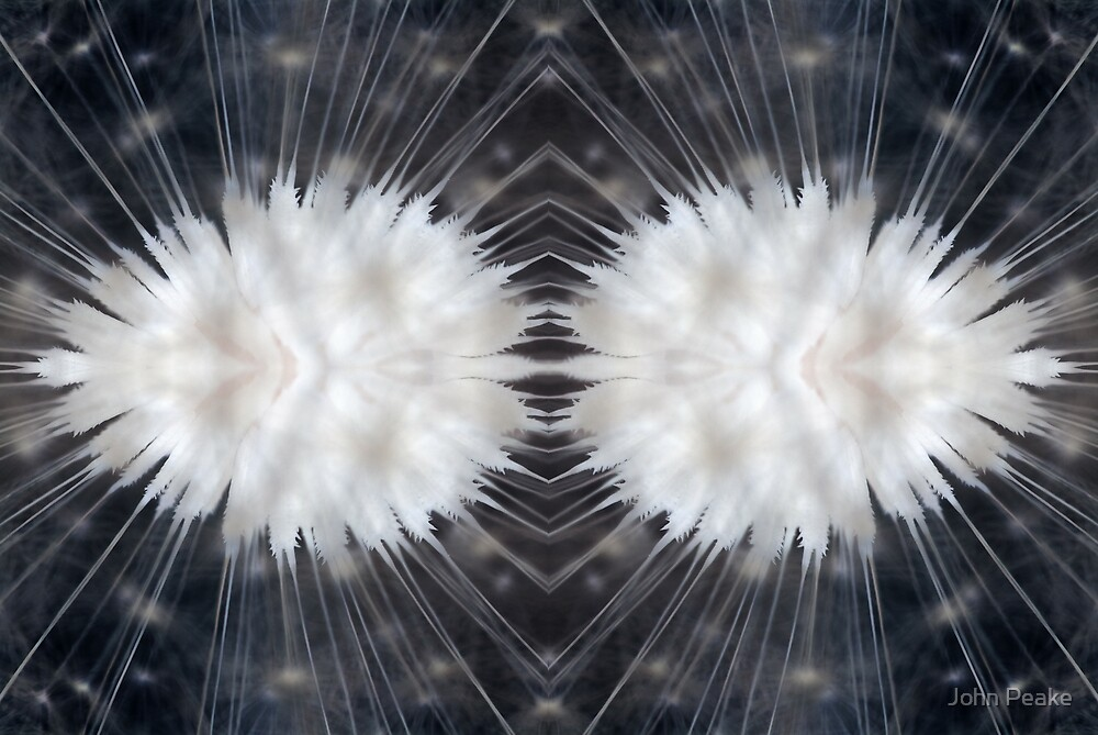 Dandelion Abstract #1 (Inverted) by John Peake