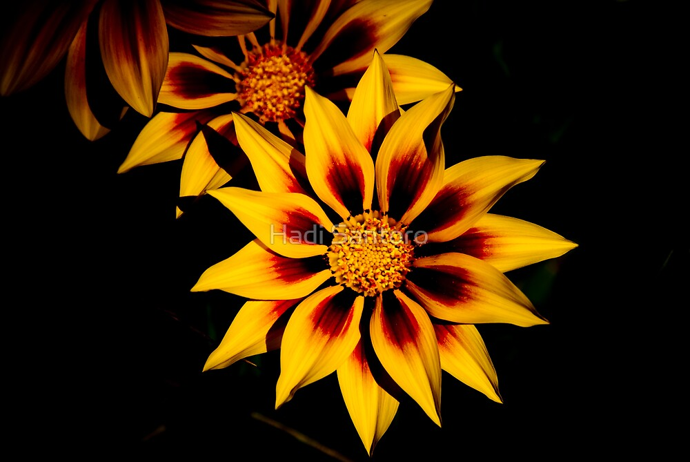 Stunning Flower by Hadi Santoro