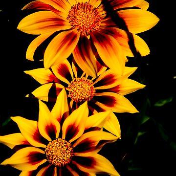 Fabulous Yellow Flower by rainbow1638