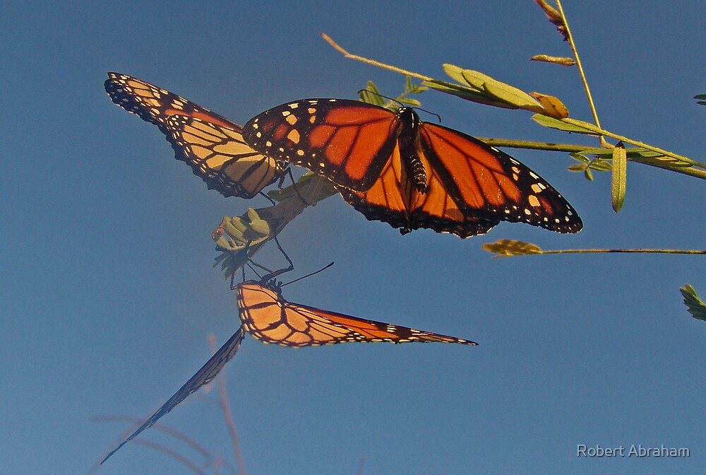 Butterflies In The Mist by Robert Abraham