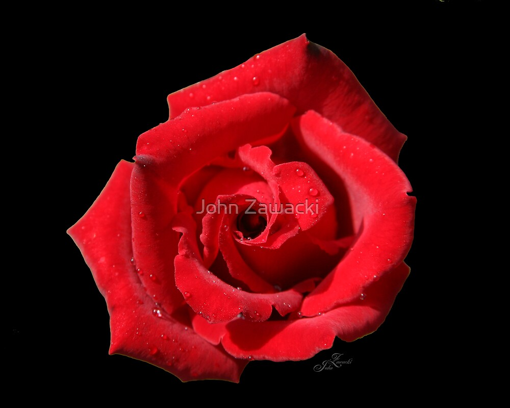 Red Rose #0070 by John Zawacki