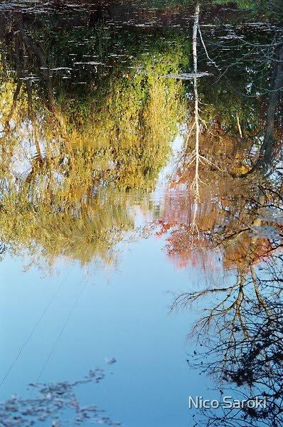 reflection in pond by Nico Saroki