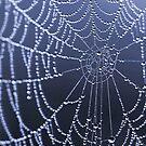 Web Design by Jo Nijenhuis