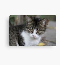 Beautiful Cat Face Photo Canvas Print