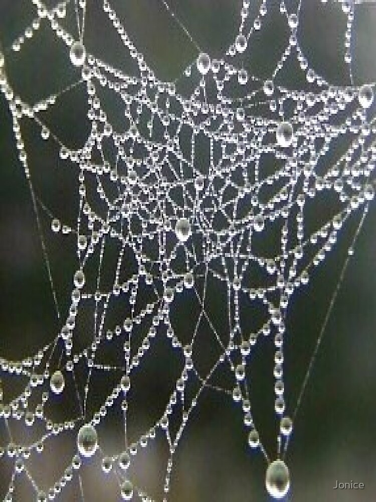 Dew On Spider Web by Jonice