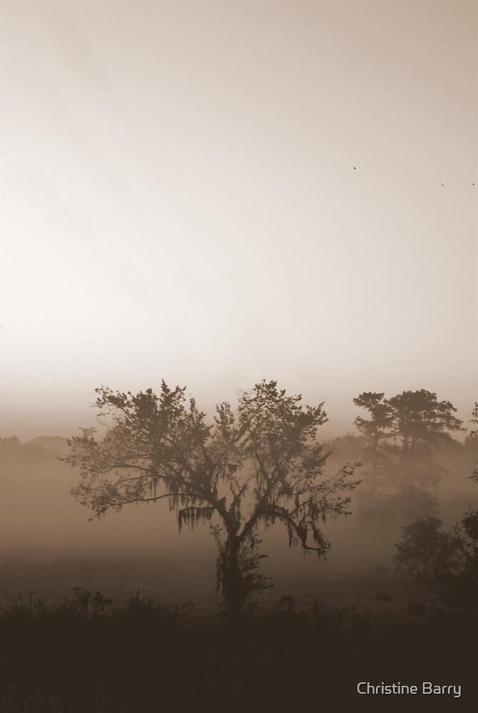 Sepia Cypress Swamp by Christine Barry