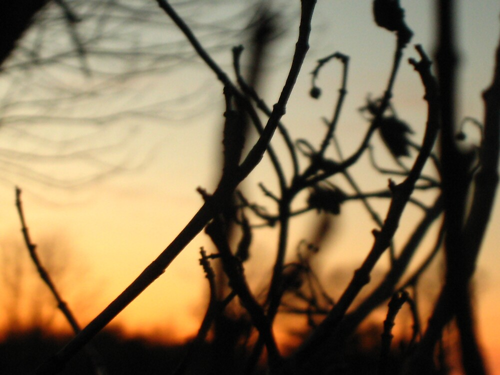 Weeding out the Sunset by Angela Housley