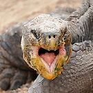 Galapagos tortoise    by Doug Cliff