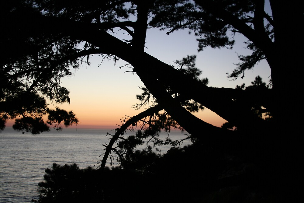 Sunset through a tree on the Pacific near Highway 1 CA by Ilan Cohen