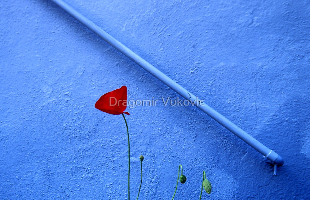 Red Blue And Green by Dragomir Vukovic