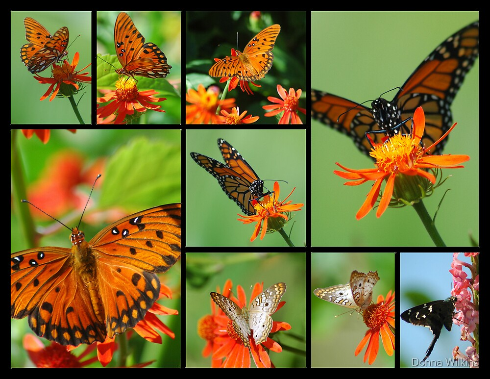 Butterfly Collage II  by Donna Wilkins