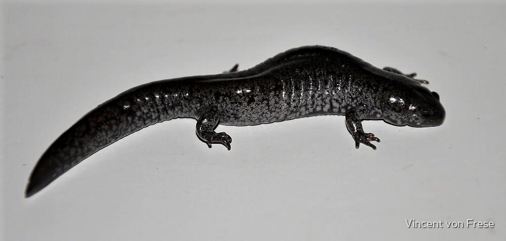 'Silver Flecked Salamander'  by Vincent von Frese
