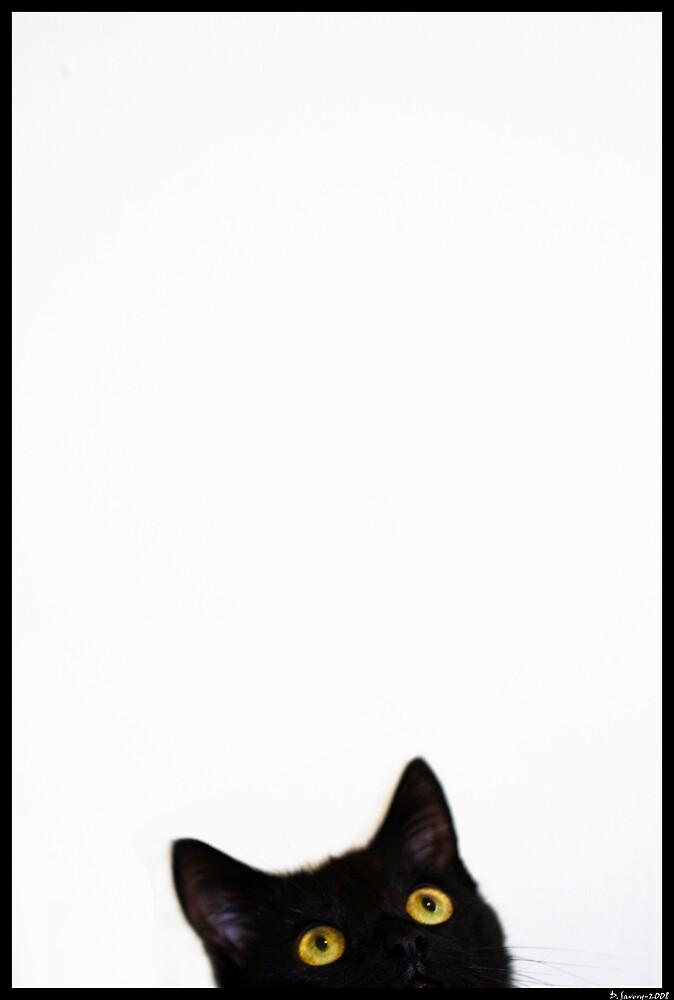 A Cat by Slinky2012