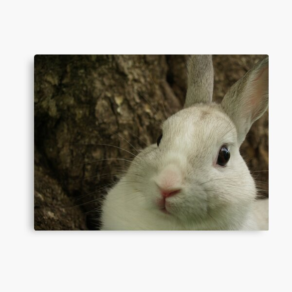 Dwarf Rabbit by Tree Canvas Print