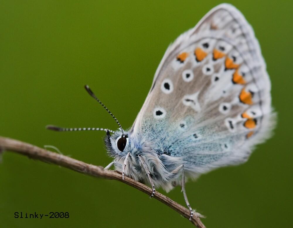 Small blue butterfly by Slinky2012