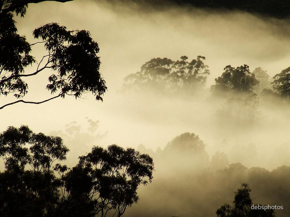 """Fog & Gums"" by debsphotos"