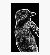 Leucism: Spangled Cotinga Photographic Print
