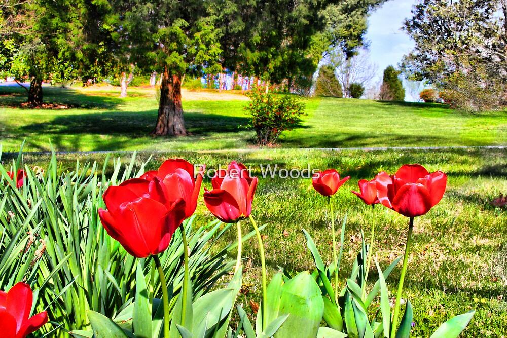 Tulips by Robert Woods