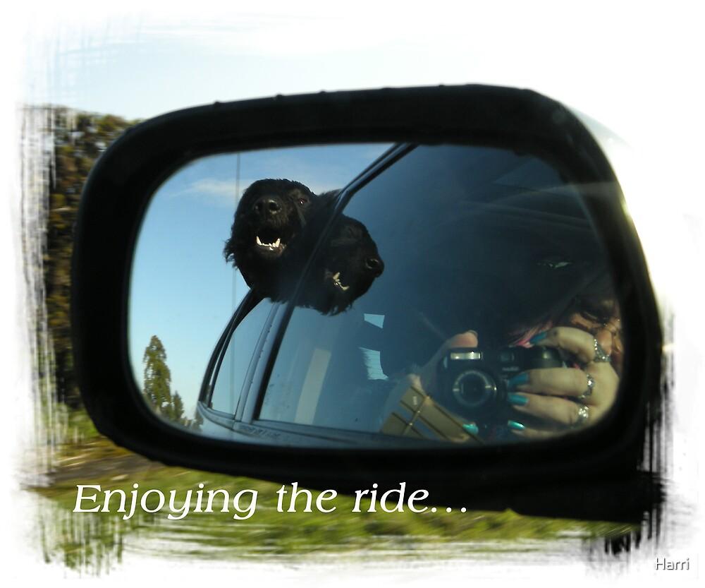 Enjoying the ride. by Harri