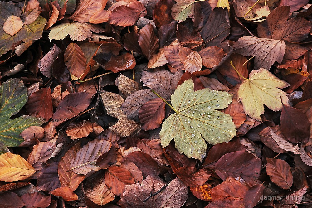 autumn leafage by dagmar luhring