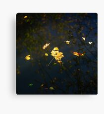 Autumn maple leaf on the blue lake water, calm colorful postcard Canvas Print