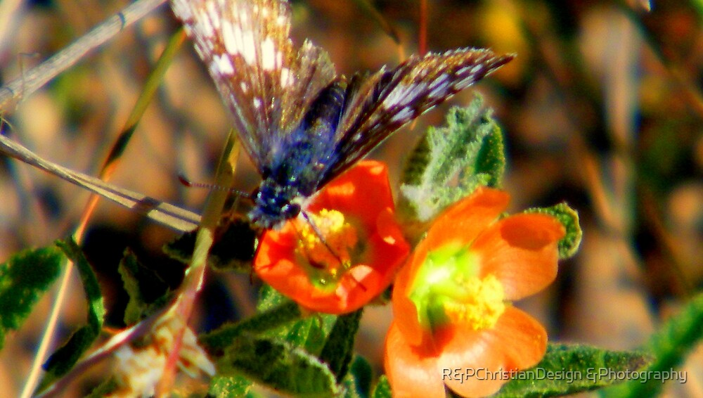 Moth Or Butterfly by R&PChristianDesign &Photography