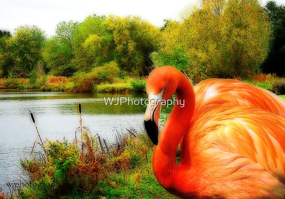 Lake Flamingo by WJPhotography