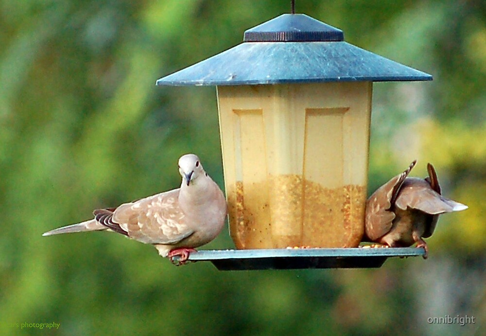 Doves by onnibright