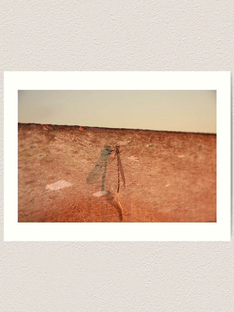 Alternate view of Dragonfly on the jetty Art Print