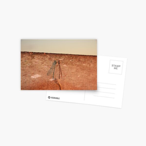 Dragonfly on the jetty Postcard