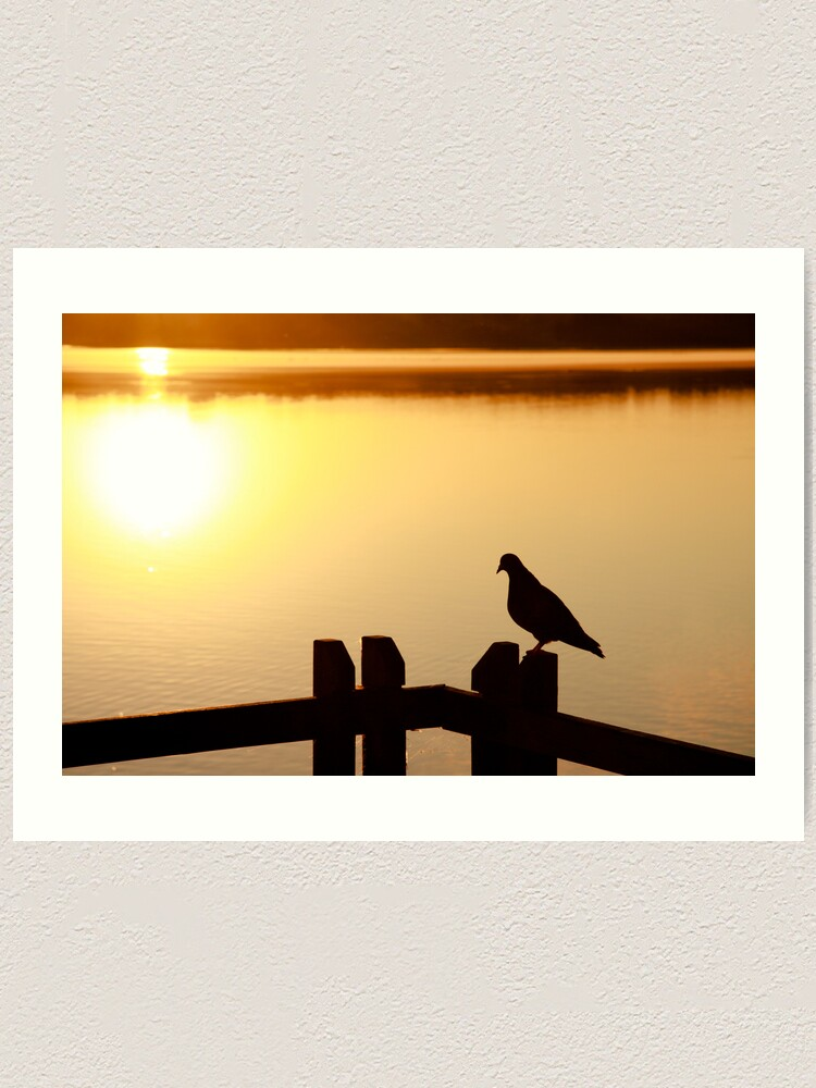 Alternate view of Pigeon sitting on the jetty Art Print
