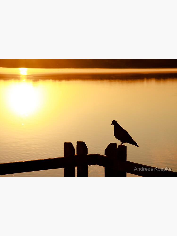 Pigeon sitting on the jetty by mistered