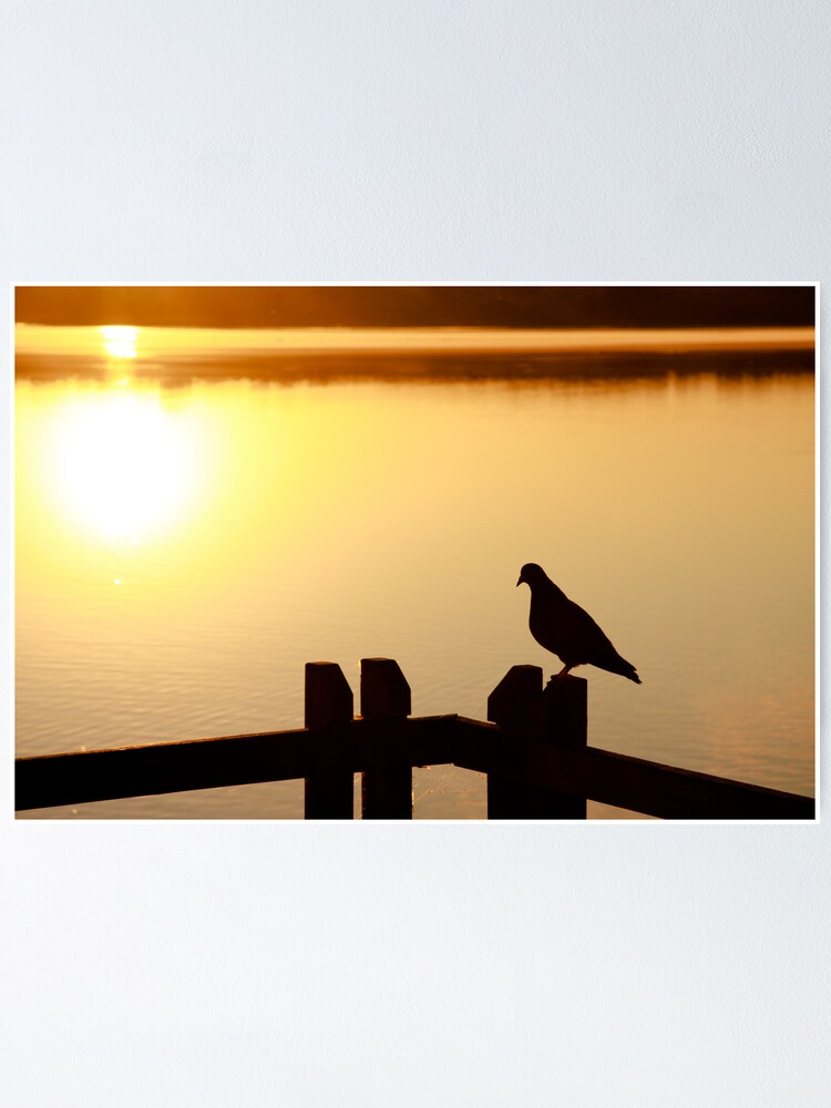 Alternate view of Pigeon sitting on the jetty Poster
